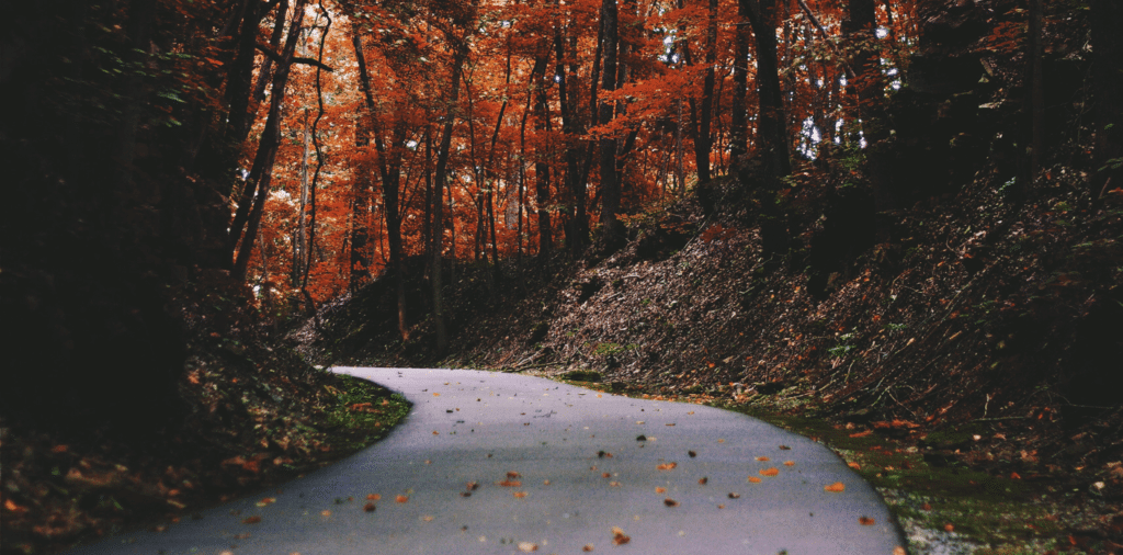 Road through the woods, showing fall foliage.